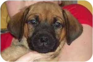 Hound (Unknown Type) Mix Puppy for adoption in Brazil, Indiana - Madie
