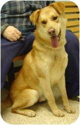 Golden Retriever Mix Dog for adoption in Chambersburg, Pennsylvania - Rocky