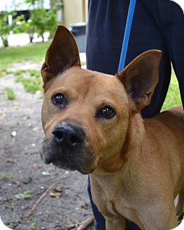 Terrier (Unknown Type, Medium) Mix Dog for adoption in Miami, Florida - Dustin