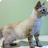 Adopt A Pet :: YaYa Brandie - Monroe, GA