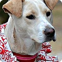 Adopt A Pet :: Petunia - PENDING, in Maine! - kennebunkport, ME