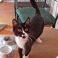 Adopt A Pet :: Missy - Escondido, CA