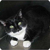 Adopt A Pet :: Sammy Sam - Warminster, PA