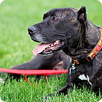 Adopt A Pet :: Edna - Chicago, IL