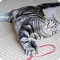 Adopt A Pet :: Cherrios - Chicago, IL