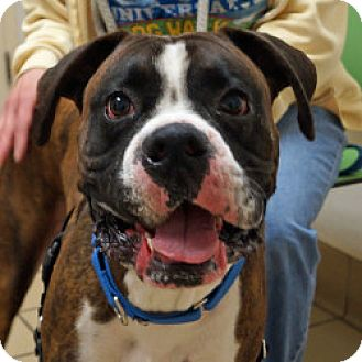 Boxer Mix Dog for adoption in Eatontown, New Jersey - Floyd