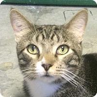 Adopt A Pet :: Horacio - Winchester, CA