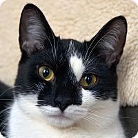 Adopt A Pet :: Phantom - Brooklyn, NY