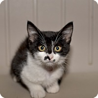 Adopt A Pet :: Rio - Medina, OH