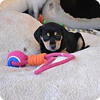 Adopt A Pet :: Coral - South Dennis, MA