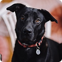 Adopt A Pet :: Lincoln - Portland, OR
