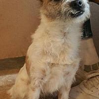 Adopt A Pet :: Lucky - Yucaipa, CA