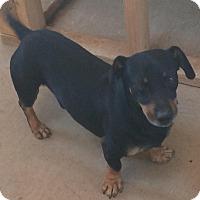 Adopt A Pet :: Wally - Post, TX