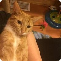 Adopt A Pet :: Edy & Gertie - LaGrange Park, IL
