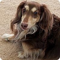 Adopt A Pet :: Hemingway - Decatur, GA