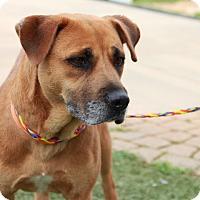 Adopt A Pet :: Sandy - Greensboro, NC