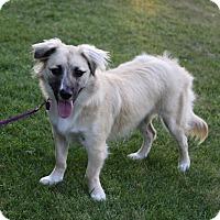 Adopt A Pet :: JOCELYN - Newport Beach, CA