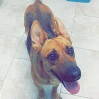Adopt A Pet :: Aria - Galveston, TX