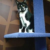 Adopt A Pet :: Juno - Miami Shores, FL