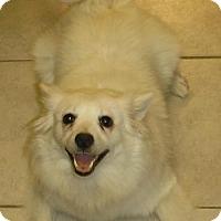 Adopt A Pet :: LuLu 100 Fee - Alpharetta, GA