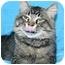 Photo 2 - Domestic Mediumhair Cat for adoption in Ladysmith, Wisconsin - Hudson