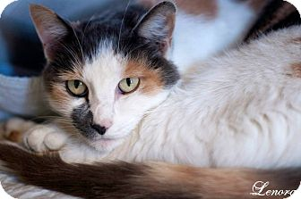 Calico Cat for adoption in Manahawkin, New Jersey - Lenora