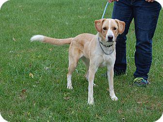 Labrador Retriever Mix Dog for adoption in North Judson, Indiana - Molly