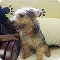 Adopt A Pet :: Reggie - Crawfordville, FL