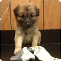 Adopt A Pet :: Roy - Courtesy post - Glastonbury, CT
