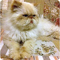 Adopt A Pet :: Romeo - Beverly Hills, CA