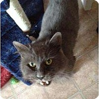 Adopt A Pet :: Mickey - Mobile, AL