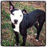 Adopt A Pet :: Faith - Winter Haven, FL