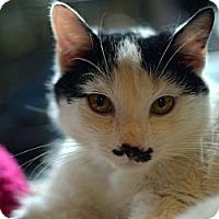 Adopt A Pet :: Stashe - Brooklyn, NY