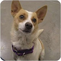 Adopt A Pet :: Stefanie - Phoenix, AZ