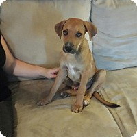 Adopt A Pet :: Prophet - San Antonio, TX