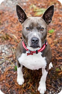 Terrier (Unknown Type, Medium) Mix Dog for adoption in Tinton Falls, New Jersey - Lil Girl