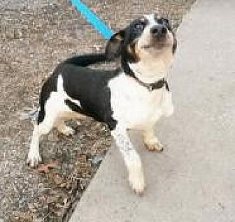 Beagle Mix Dog for adoption in Prestonsburg, Kentucky - Fred