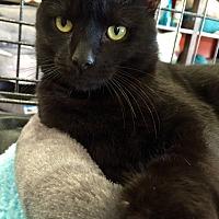 Adopt A Pet :: Carson - Cerritos, CA