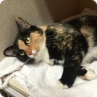 Adopt A Pet :: CATALINA - 2015 - Hamilton, NJ