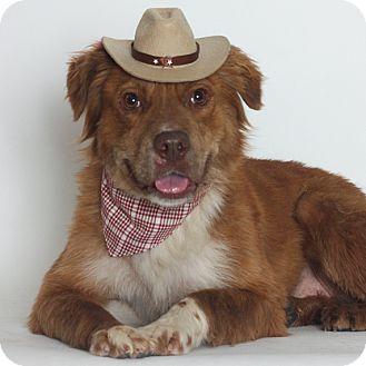 Border Collie Mix Dog for adoption in Stockton, California - Roxie