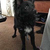 Adopt A Pet :: Jasper - San Ramon, CA