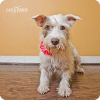 Adopt A Pet :: Willow - Pearland, TX