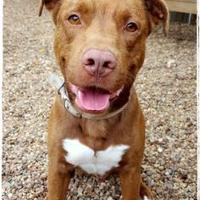 Adopt A Pet :: Clifford - Chattanooga, TN