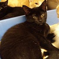 Adopt A Pet :: Blythe - Chelsea - Kalamazoo, MI