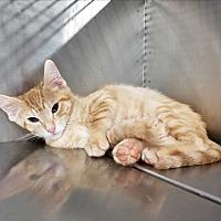 Adopt A Pet :: Julien - Montgomery City, MO