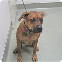 Adopt A Pet :: Gracie - Wildomar, CA