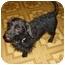 Photo 1 - Dachshund Dog for adoption in Lawndale, North Carolina - Waldo