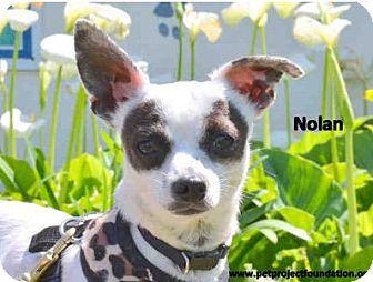 Chihuahua Mix Dog for adoption in San Clemente, California - NOLAN