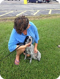 Blue Heeler/Hound (Unknown Type) Mix Dog for adoption in SOUTHINGTON, Connecticut - Bella