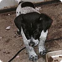 Adopt A Pet :: mason - Wanaque, NJ